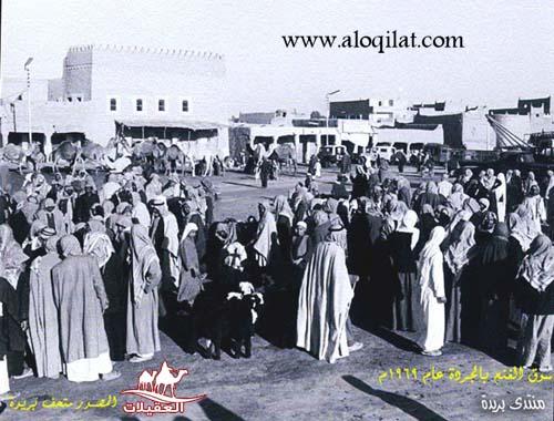 مجالس العقيلات في الوطن العربي